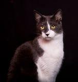 Katze mit skeptischem Ausdruck auf schwarzem Hintergrund Lizenzfreie Stockbilder