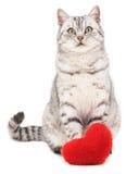 Katze mit Spielzeugherzen Lizenzfreie Stockfotos