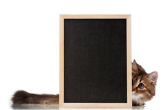 Katze mit Tafel Lizenzfreie Stockbilder