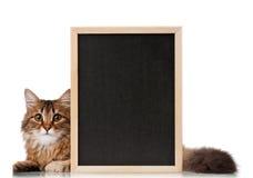 Katze mit Tafel Stockfoto