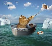 Katze mit Telefon auf Boot stockfoto