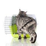 Katze mit Transportkasten Stockfotos