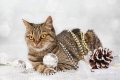 Katze mit Weihnachtsdekorationen Stockfoto