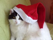 Katze mit Weihnachtshut Lizenzfreie Stockfotos