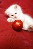 Katze mit Weihnachtskugel Stockfoto