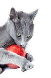 Katze mit Weihnachtsspielzeug stockfoto