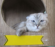 Katze mit Zeichen Stockfoto