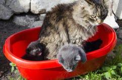 Katze mit zwei Kätzchen draußen stockfoto