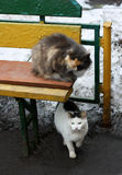 Katze mit zwei Obdachlosen Lizenzfreies Stockfoto