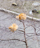Katze mit zwei Rottönen auf einem Frühlingsbaum Stockbilder