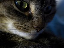 Katze nachts Stockfotos