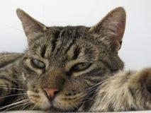 Katze - Nahaufnahme Stockbilder