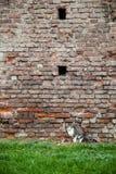 Katze nahe Backsteinmauer Stockbild