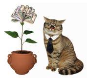 Katze nahe dem Geldbaum lizenzfreie stockfotos
