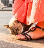 Katze nahe dem Schrein Stockfoto