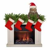 Katze nahe dem Weihnachtskamin lizenzfreies stockbild
