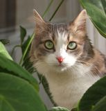 Katze nahe verlässt von den Anlagen Stockbilder