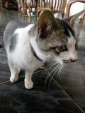 Katze nett Lizenzfreie Stockfotos