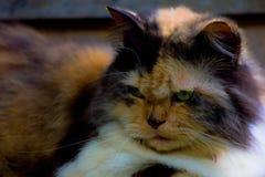 Katze nett lizenzfreie stockbilder
