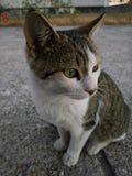 Katze numerisch 1 stockfotografie