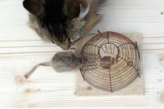 Katze oder die Mausefalle Stockfoto