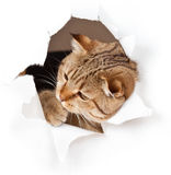 Katze in Papierseite heftigem Loch Lizenzfreie Stockfotos