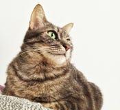 Katze passt draußen auf Stockfotografie