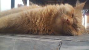 Katze pic lizenzfreies stockfoto