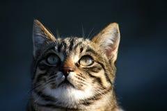 Katze-Portrait Lizenzfreie Stockfotografie