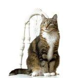 Katze-Portrait Lizenzfreie Stockfotos
