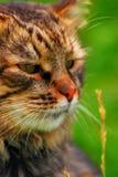 Katze-Portrait Stockbild