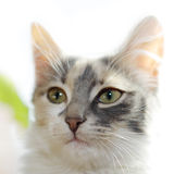 Katze-Portrait Stockfoto