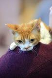 Katze rücksichtnahme Stockbilder