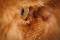 Katze ` s Gesicht Stockfotos