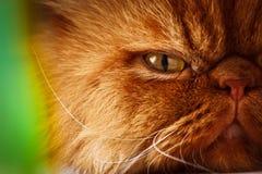 Katze ` s Gesicht Lizenzfreie Stockbilder