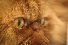 Katze ` s Gesicht Lizenzfreies Stockfoto