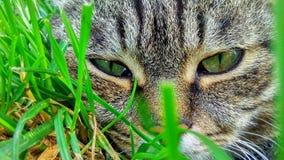 Katze ` s Gesicht im Gras - umfangreich lizenzfreies stockbild