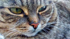Katze ` s Gesicht - umfangreich lizenzfreie stockfotografie