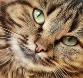 Katze `s Nahaufnahme Stockfotografie