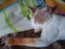 Katze schön lizenzfreies stockfoto