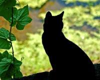 Katze-Schattenbild Stockbilder