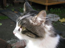 Katze schaut beiseite Stockfotografie