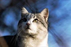 Katze schaut die Sonne stockfotos