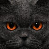 Katze schaut merkwürdigen Blick in der Nacht Lizenzfreie Stockbilder