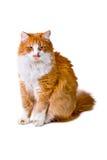 Katze schaut mit Interesse Lizenzfreie Stockfotografie