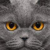 Katze schaut sehr merkwürdigen Blick in der Nacht Stockbild