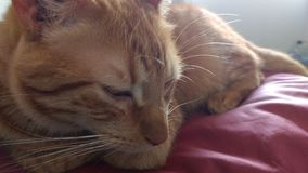 Katze schläfrig Lizenzfreies Stockbild