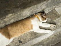 Katze schläft Stockbild