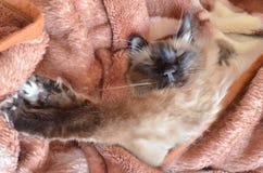 Katze schläft lizenzfreies stockfoto