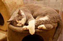 Katze schlafend auf einem Ruhesessel Lizenzfreie Stockfotografie